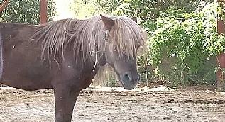 FET�'n�n kapat�lan okulundaki atlara el konuldu