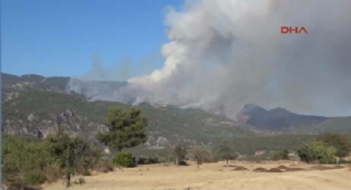 Muğla'da korkutan orman yangını!