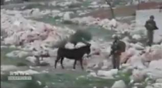 İşgalci İsrail askerlerinin Dünyaya rezil olduğu anlar kamerada