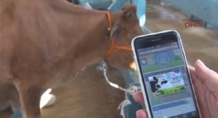 Denizli'de hayvan pazarı için web sitesi kuruldu