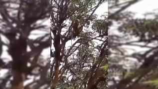 İnanılmaz olay! Maymunlar görevliye saldırıp kan örneklerini çaldı