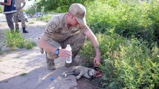 Yaralı köpeğe Mehmetçik şefkat eli uzattı