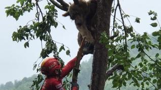 Çıktığı ağaçta mahsur kaldı! İmdadına AKUT yetişti
