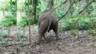 İnanılmaz anlar! Yavru filin salıncağı görenleri hayrete düşürdü