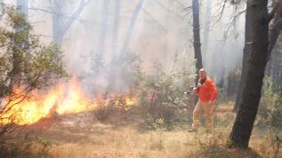 Aydos'da ormanlık alanda yangın