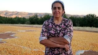 Babadan kalma 500 kayısı ağacına özenle bakıyor: Kadının ekonomik bağımsızlığı olmalı