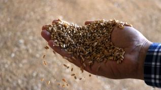 Devlet desteğiyle yerli ve sertifikalı tohum üretmeye başladı
