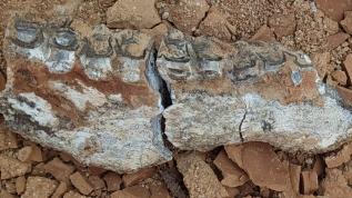 Heyecanlandıran keşif: Tam 9 milyon yıllık