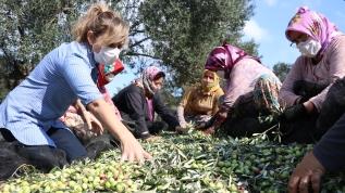 Yöneticiliği bırakıp zeytinyağı üretmeye başladı, uluslararası takdir görüyor