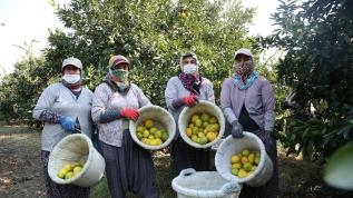 Kadınlar günün ilk ışıklarıyla bahçelerin yolunu tutuyor, aile ekonomisine katkı sağlıyor
