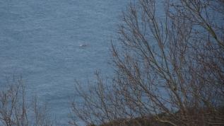 Kuru yük gemisinin batması sonucu kaybolan 3 mürettebatı arama çalışmaları devam ediyor