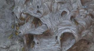 7 kişilik aile arıların istilasına uğradı