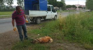 Kendisini parçalamak isteyen köpeğini suda boğarak ölümden kurtuldu