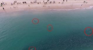 Kalabalık plajda köpekbalıkları şoke etti