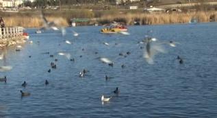 Mogan Gölü'nde temizlik seferberliği başlatıldı