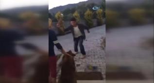 Havlayan köpeği levyeyle böyle dövdü