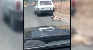 Muğla'da vahşet! Köpeği kilometrelerce sürükledi
