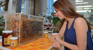 Sokmayan m�layim ar�lar, EXPO 2016 Antalya�da